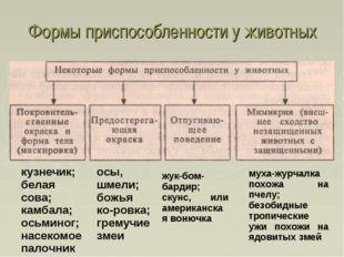 Формы приспособленности у животных кузнечик; белая сова; камбала; осьминог; н