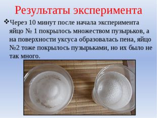 Результаты эксперимента Через 10 минут после начала эксперимента яйцо № 1 пок