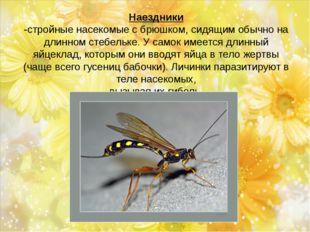 Наездники -стройные насекомые с брюшком, сидящим обычно на длинном стебельке.