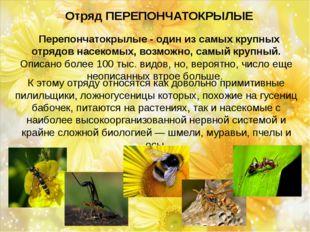 Отряд ПЕРЕПОНЧАТОКРЫЛЫЕ Перепончатокрылые - один из самых крупных отрядов н