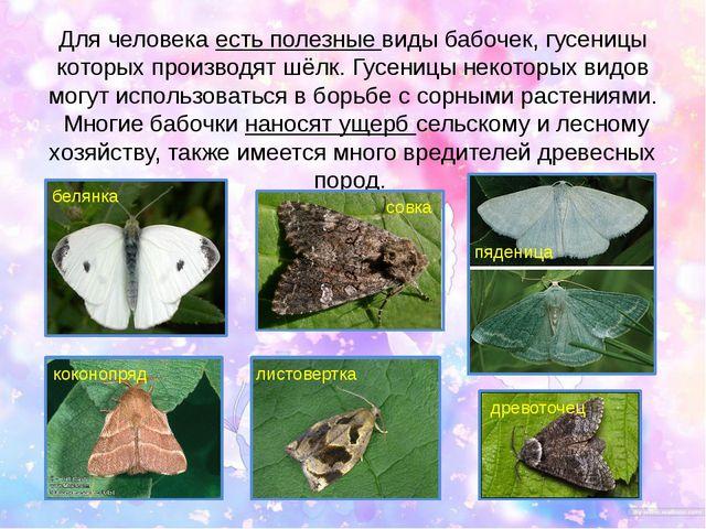 Для человека есть полезные виды бабочек, гусеницы которых производят шёлк. Гу...