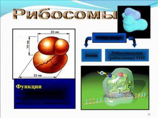 * Состав Белки Рибосомальная (рибосомная) РНК Функции: обеспечивает биосинтез