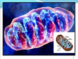* 1.- внутренняя мембрана образующая складки - кристы. 2.- внешняя мембрана;