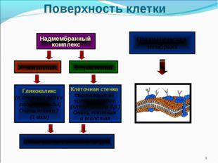 Поверхность клетки * Надмембранный комплекс У животных У растений Клеточная с