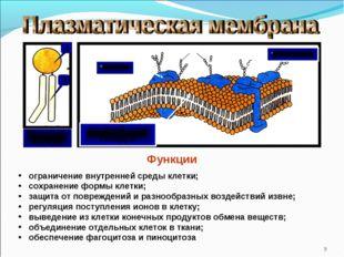* двойной слой липидов белки углеводы Функции ограничение внутренней среды к
