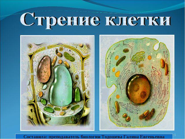 * Составила: преподаватель биологии Тодошева Галина Евгеньевна