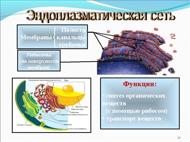 * Полости Мембраны канальцы трубочки Рибосомы (на поверхности мембран) Функци...