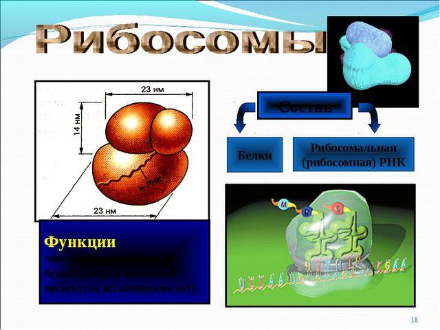 * Состав Белки Рибосомальная (рибосомная) РНК Функции: обеспечивает биосинтез...