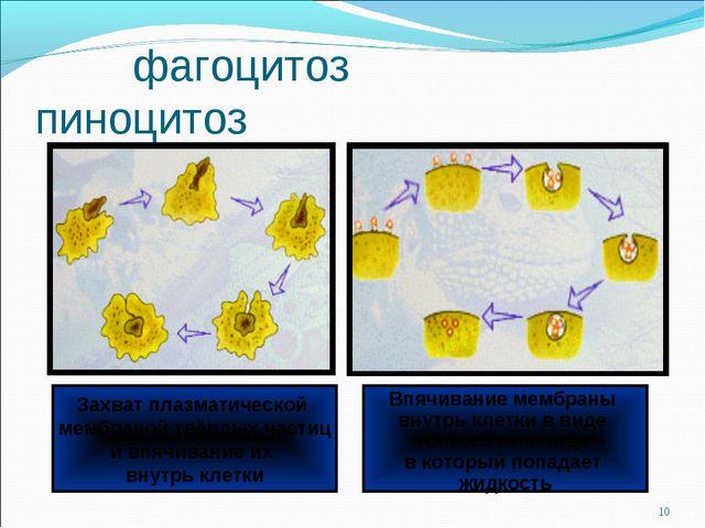 фагоцитоз пиноцитоз * Захват плазматической мембраной твёрдых частиц и впячи...