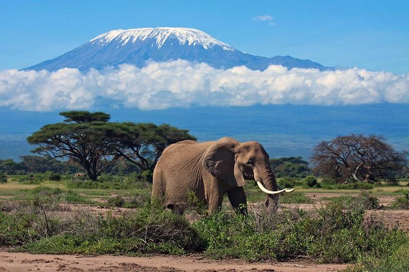 Красивое фото горы Килиманджаро. Танзания. Африка