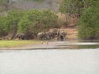 ElefantenAmRufiji.jpg