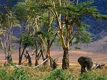 http://exotic-travel-club.ru/files/africa/tanzania_ngorongoro_elephants.jpg