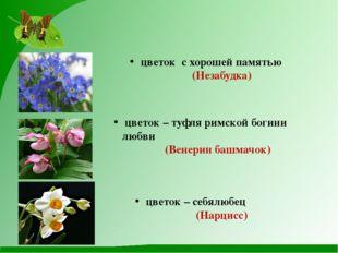 цветок – туфля римской богини любви (Венерин башмачок) цветок – себялюбец (Н