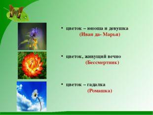 цветок – юноша и девушка (Иван да- Марья) цветок, живущий вечно (Бессмертник