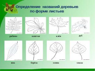 Определение названий деревьев по форме листьев рябина каштан клён дуб ива бер