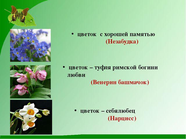 цветок – туфля римской богини любви (Венерин башмачок) цветок – себялюбец (Н...