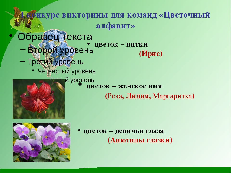I конкурс викторины для команд «Цветочный алфавит» цветок – нитки (Ирис) цве...