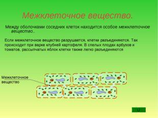Межклеточное вещество. Между оболочками соседних клеток находится особое межк