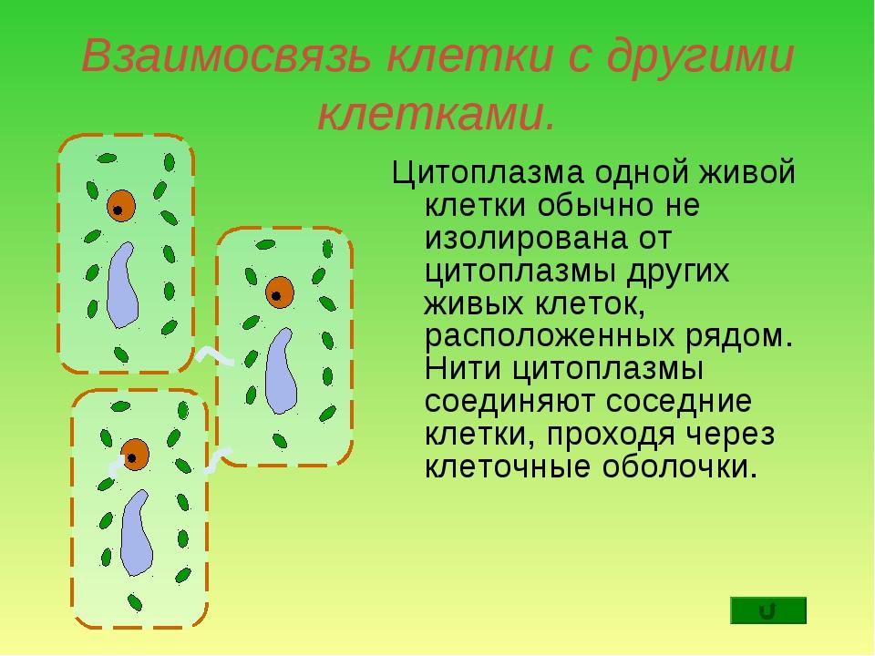 Взаимосвязь клетки с другими клетками. Цитоплазма одной живой клетки обычно н...