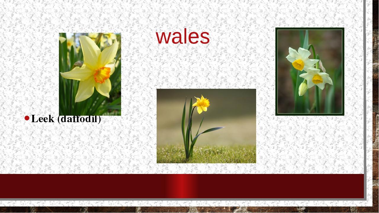 wales Leek (daffodil)