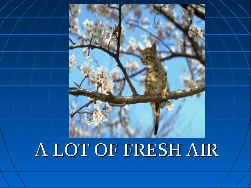 A LOT OF FRESH AIR