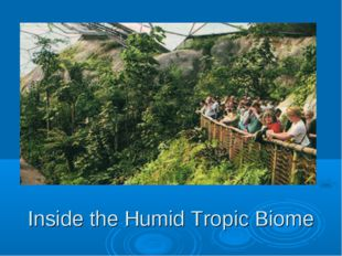 Inside the Humid Tropic Biome