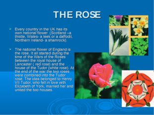 THE ROSE Every country in the UK has its own national flower (Scotland –a thi