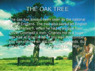 THE OAK TREE The oak has always been seen as the national tree of England. Th
