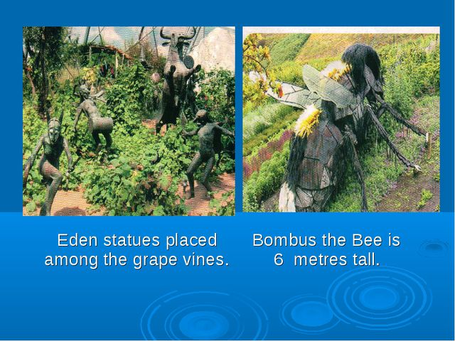 Eden statues placed Bombus the Bee is among the grape vines. 6 metres tall.