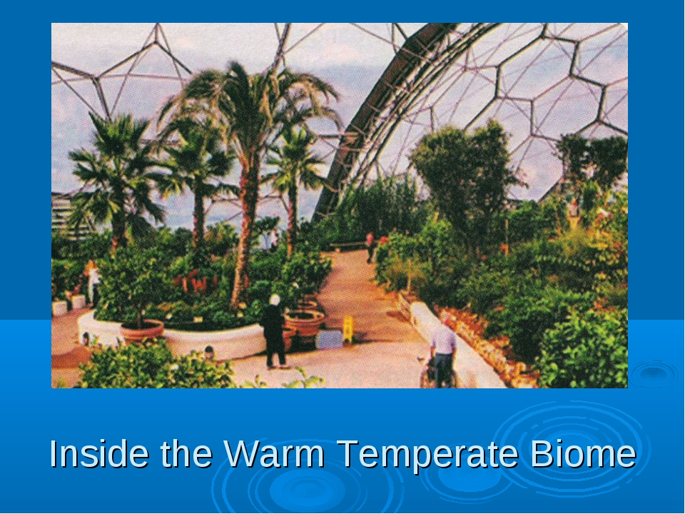 Inside the Warm Temperate Biome