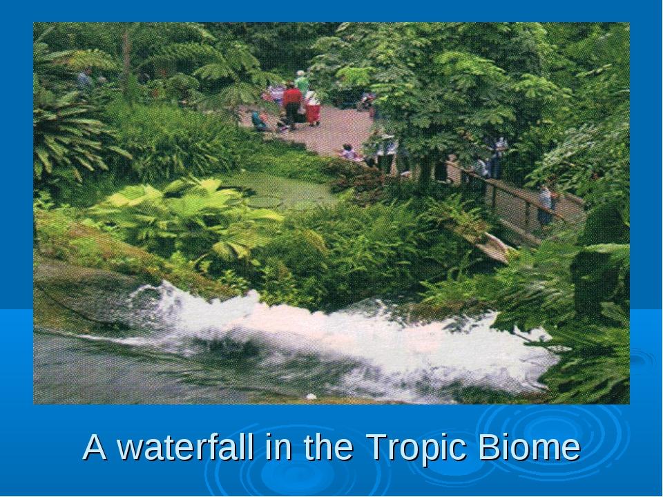 A waterfall in the Tropic Biome