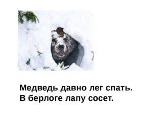 Медведь давно лег спать. В берлоге лапу сосет.