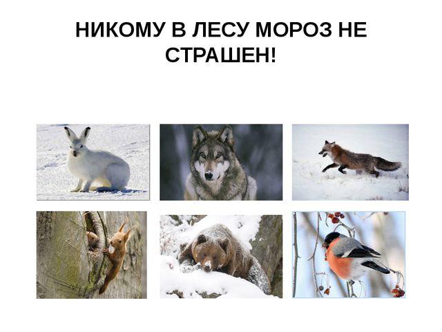 НИКОМУ В ЛЕСУ МОРОЗ НЕ СТРАШЕН!