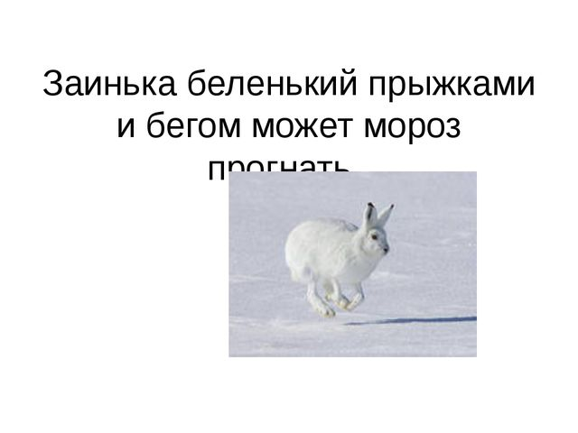 Заинька беленький прыжками и бегом может мороз прогнать.
