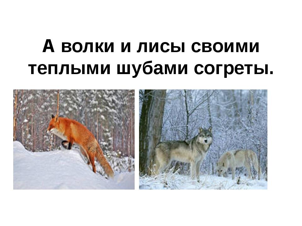А волки и лисы своими теплыми шубами согреты.