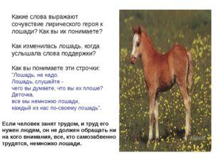 Какие слова выражают сочувствие лирического героя к лошади? Как вы их понимае