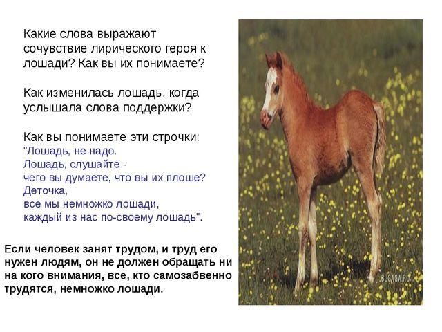 Какие слова выражают сочувствие лирического героя к лошади? Как вы их понимае...