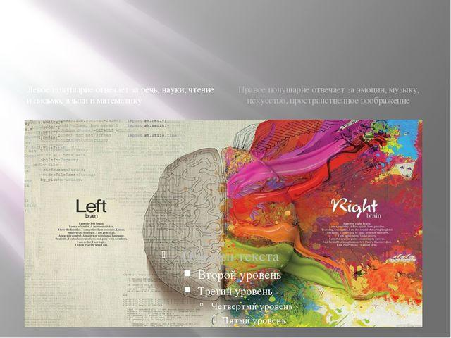 Левое полушарие отвечает за речь, науки, чтение и письмо, языки и математику...