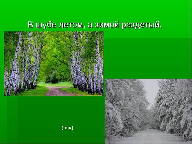 В шубе летом, а зимой раздетый. (лес)