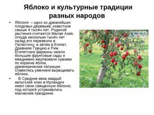 Яблоко и культурные традиции разных народов Яблоня – одно из древнейших плод