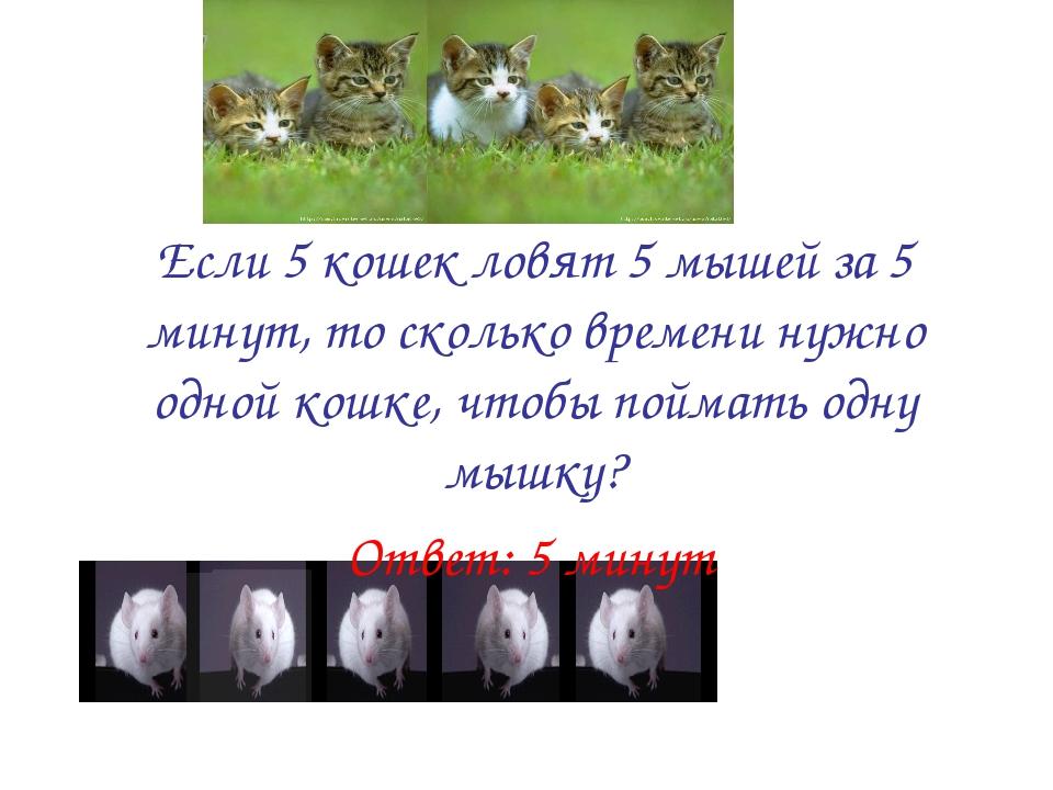 Если 5 кошек ловят 5 мышей за 5 минут, то сколько времени нужно одной кошке,...