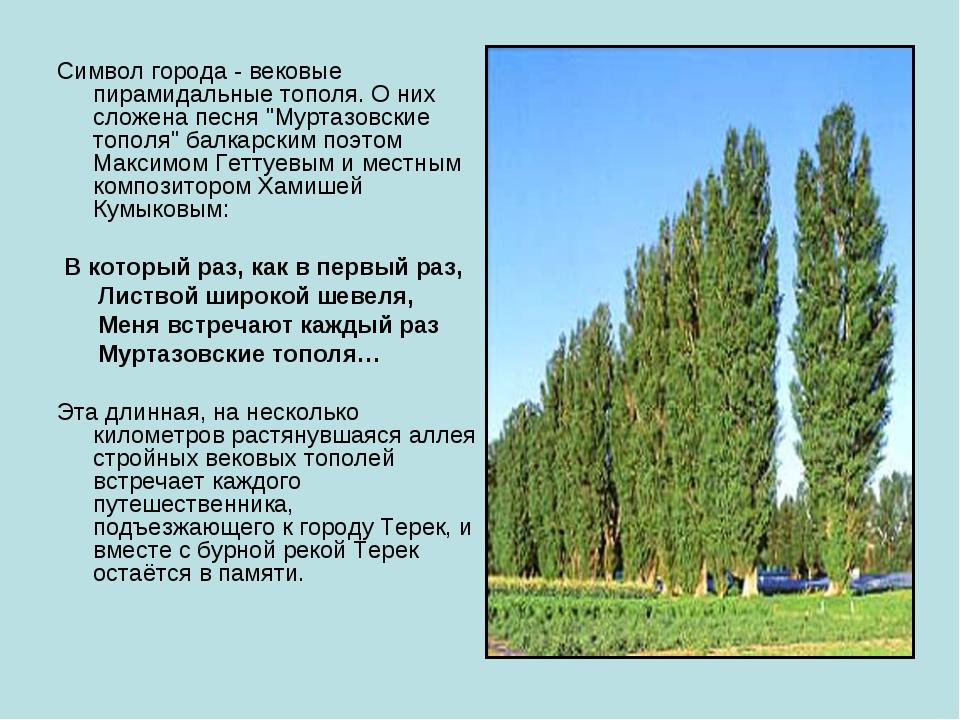 """Символ города - вековые пирамидальные тополя. О них сложена песня """"Муртазовск..."""