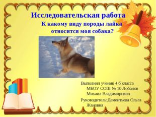 Исследовательская работа К какому виду породы лайка относится моя собака? Вып