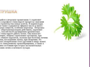 Содержащийся в петрушке провитамин А укрепляет зрение, а хлорофилл стимулиру