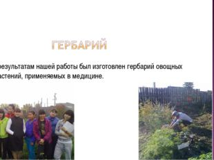 По результатам нашей работы был изготовлен гербарий овощных растений, примен