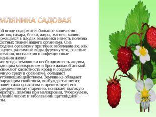 В этой ягоде содержится большое количество витаминов, сахара, белки, жиры, м