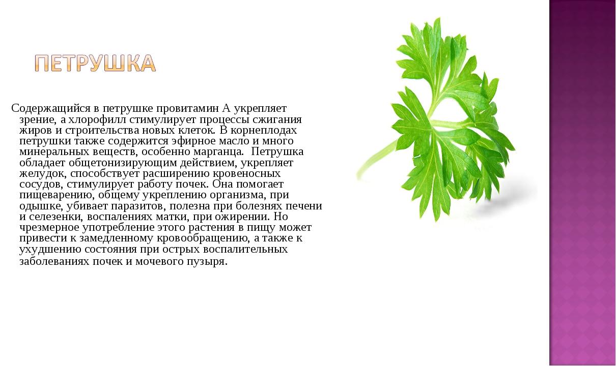 Содержащийся в петрушке провитамин А укрепляет зрение, а хлорофилл стимулиру...