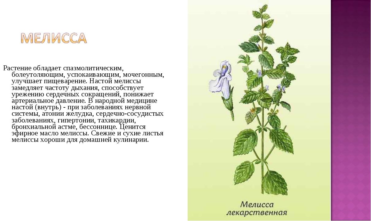 Растение обладает спазмолитическим, болеутоляющим, успокаивающим, мочегонным...