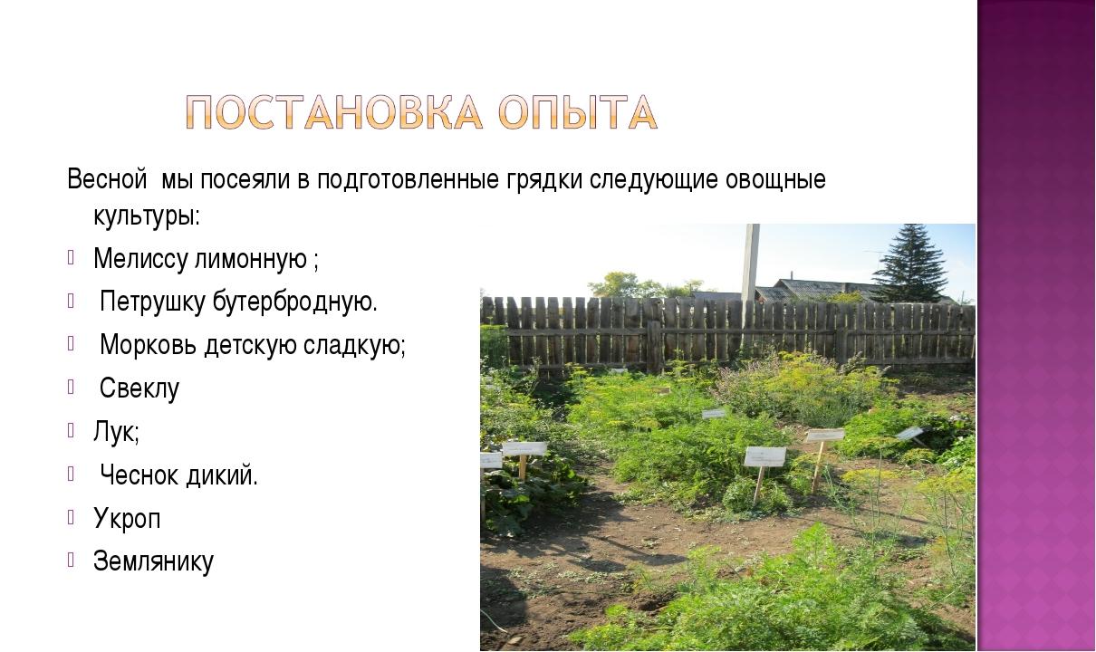 Весной мы посеяли в подготовленные грядки следующие овощные культуры: Мелиссу...