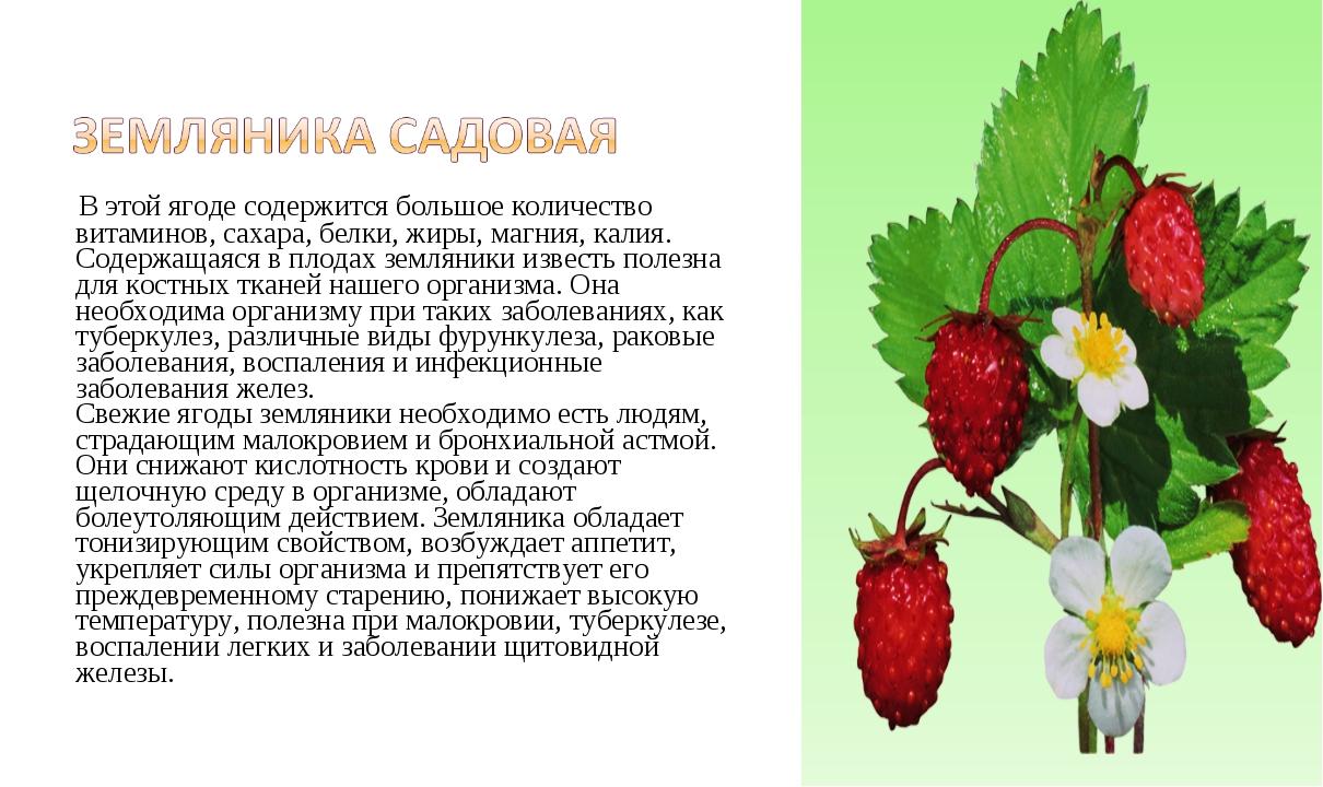 В этой ягоде содержится большое количество витаминов, сахара, белки, жиры, м...